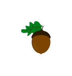 acorn of strong oak icon of color vector image