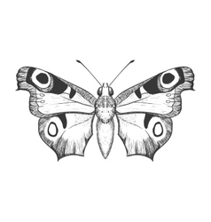 Butterfly icon Insect design graphic vector
