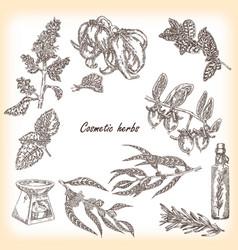 Cosmetic herbs vector