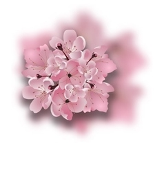 Japanese cherry Sakura Bouquet of pink flowers vector image
