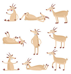 set of different funny goats in different poses vector image