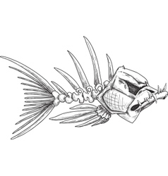 sketch evil skeleton fish with sharp teeth vector image