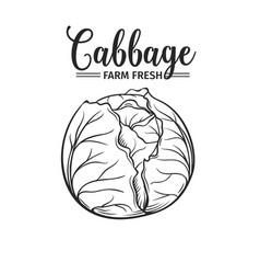 hand drawn cabbage icon vector image vector image