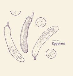 hand drawn sketch whole eggplant with slices vector image vector image