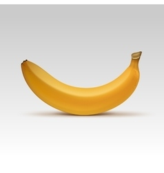 Banana Isolated on White Background vector image