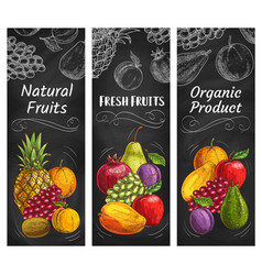 Fruits sketch banners tropical farm market food vector