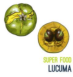 full color super food hand drawn sketch vector image