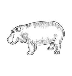 Hippopotamus animal sketch vector