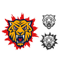 logo with head a tiger vector image