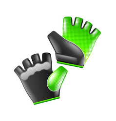 sport gloves isolated on white vector image