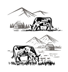 cows eat grass in village against background of vector image