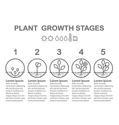 Plant growth stages infographics vector
