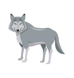 Portrait wolf husky animal wildlife image vector