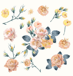 set realistic yellow pink roses in vintage style vector image