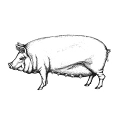 Pig in hand drawn style vector image
