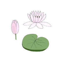 Color of lotus bud and leaf on vector