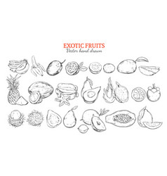 monochrome exotic and tropical fruits collection vector image