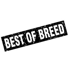 Square grunge black best of breed stamp vector
