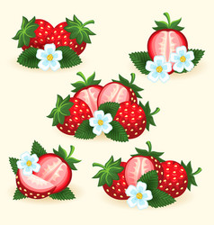 Strawberry freshness fruit set vector