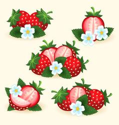 strawberry freshness fruit set vector image