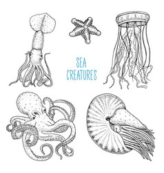 fishes or seafood or sea creature nautilus vector image