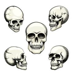 views of human skull vector image vector image