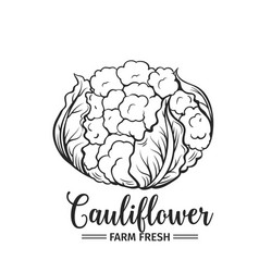 Hand drawn cauliflower icon vector