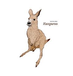 Kangaroo hand drawing vector