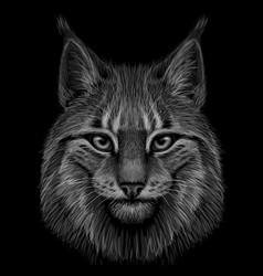 Lynx graphic drawn monochrome portrait vector