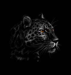 Portrait of a leopard head on a black background vector