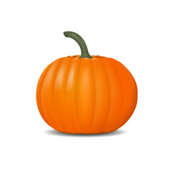 pumpkin realistic fresh and orange vector image