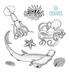 fishes or sea creature octopus and squid calamari vector image vector image