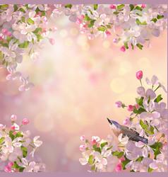 spring apple blossom vector image