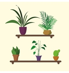 houseplants on shelf in flat design vector image