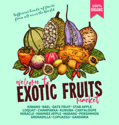 Exotic fruits sketch poster for farm market vector