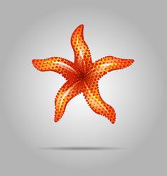 summer concept represented by orange sea star icon vector image