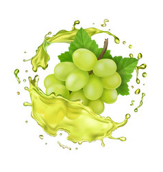 white grapes branch and juice splash vector image