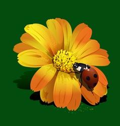 ladybird on yellow flower vector image vector image
