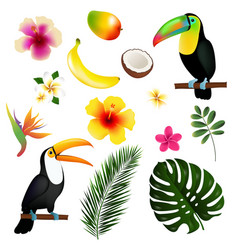 tropical leaves toucan and fruit vector image