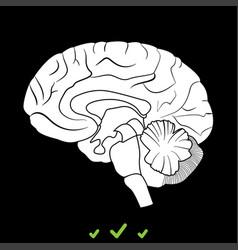 brain it is white icon vector image