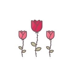 Rose flowers isolated on white vector image vector image
