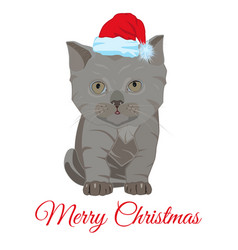 cute sad little kitten in santa hat flat vector image