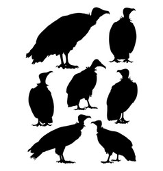 hooded vulture birds animal silhouette vector image