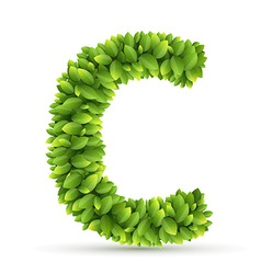 Letter C alphabet of green leaves vector image