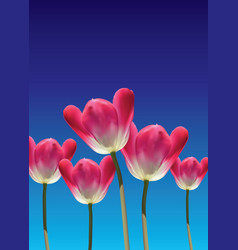 realistic 3d tulips vector image