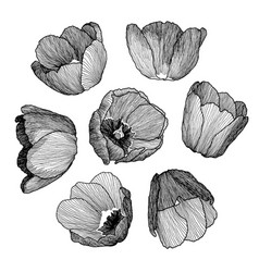 graphic hand-drawn ink set of tulip vector image