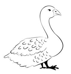 Domestic white goose vector