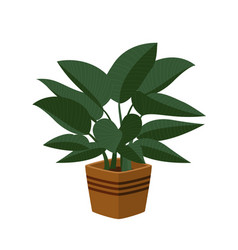 Philodendron congo indoor plant in pot beautiful vector