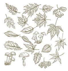set of hand drawn leaves berries and mushrooms vector image