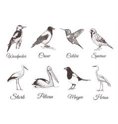 birds set sketch collection of birds vector image